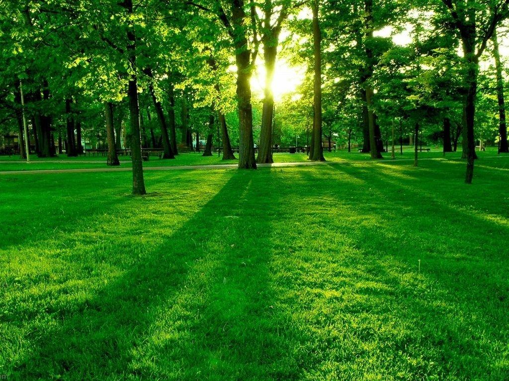 Wallpaper Green Grass Wallpaper 1024 X 768 Download Close