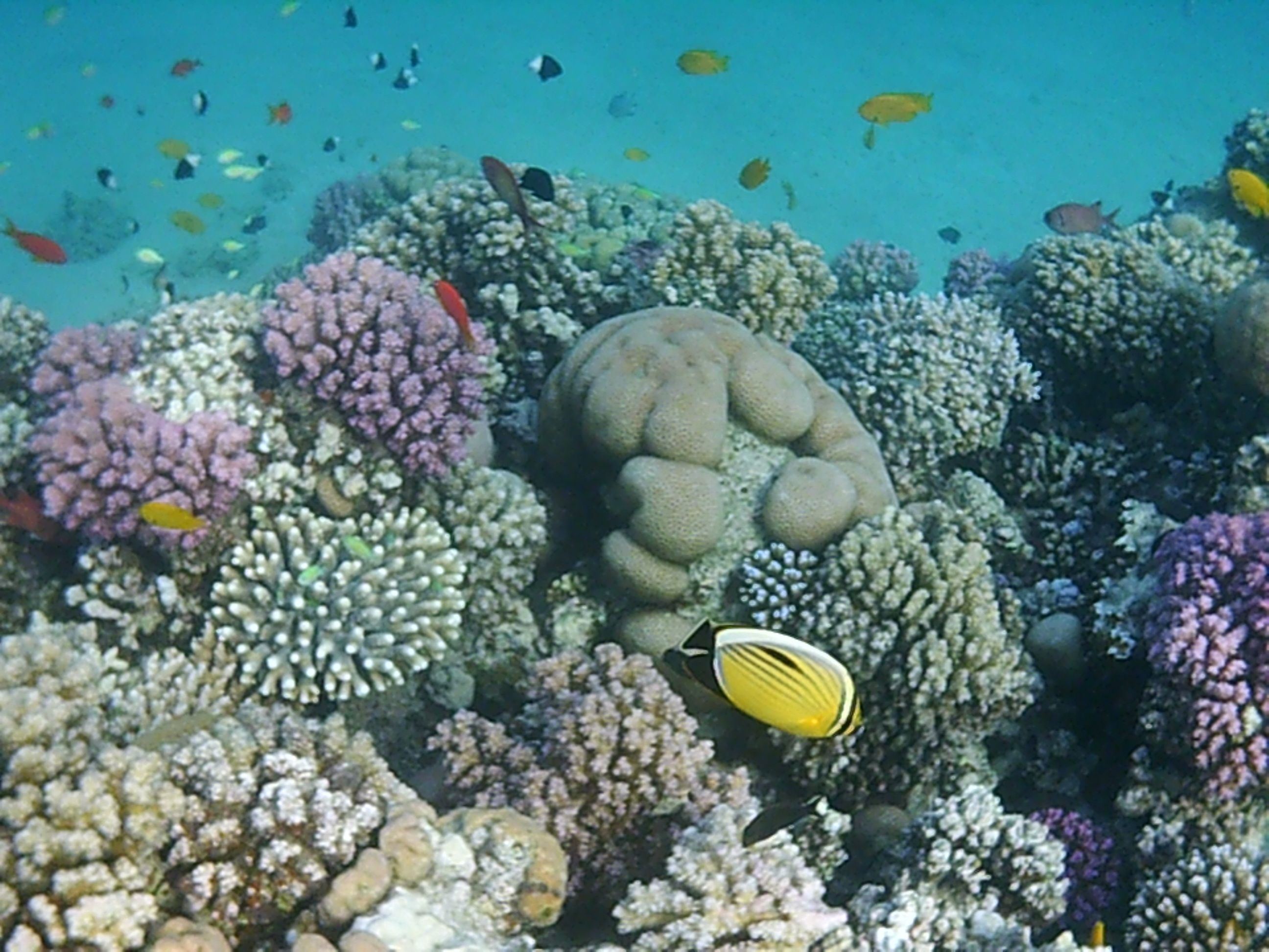 coral view