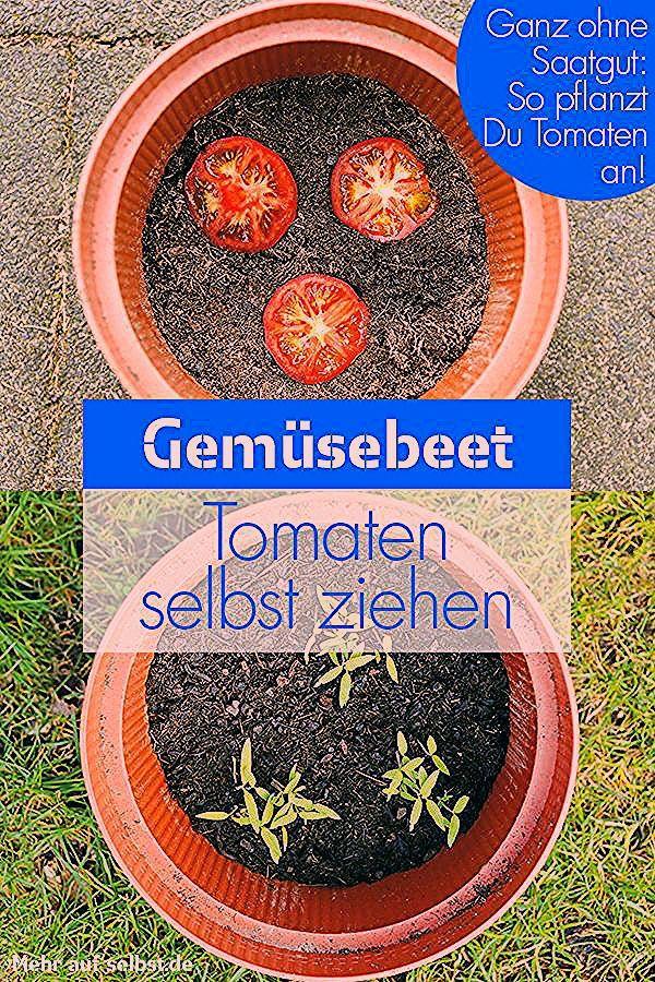 Photo of Tomaten selber ziehen | selbst.de