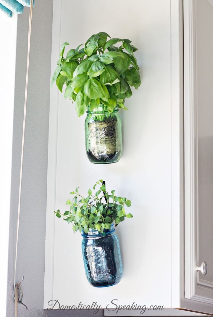 hanging fresh herbs in vintage blue and green mason jars craft herbes aromatiques d co