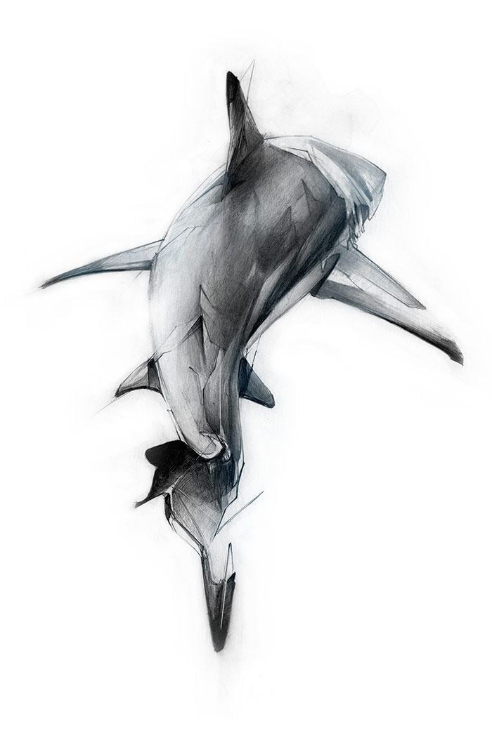 This is an image of Sassy Shark Tattoo Drawing