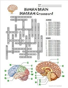 Brain crossword with diagram editable diagram brain and brain brain crossword with diagram editable ccuart Choice Image