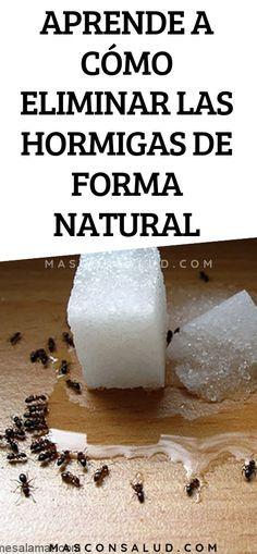 Como Acabar Con Las Hormigas Aprende A Como Eliminar Las Hormigas En Tu Casa De Forma Natural