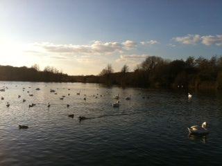 Cosmeston Lake, Vale of glamorgan. Post-work run