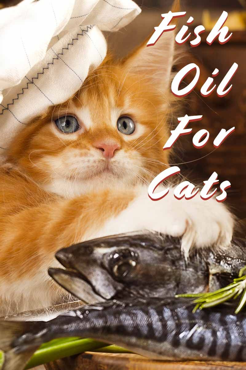 Fish Oil For Cats The Benefits And How To Serve It Cat Nutrition Cat Care Sick Cat