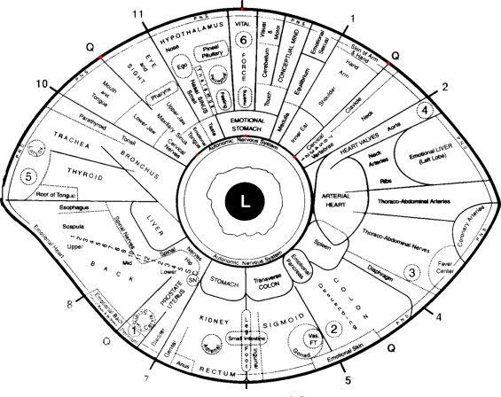 Free Iridology Eye Chart Downloads Large Iridology Chart Total