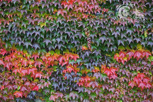 Autumn / Fall / Foliage