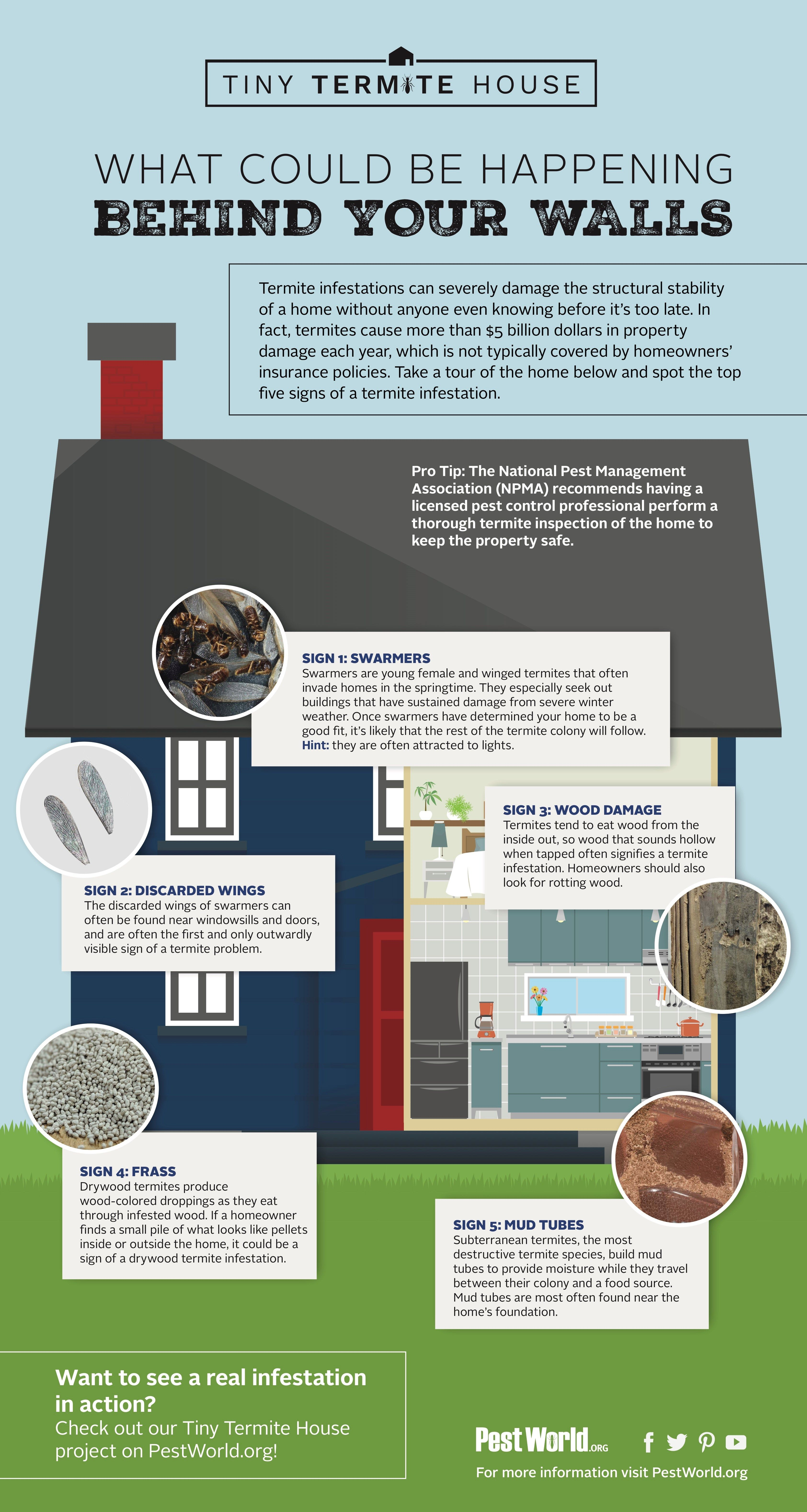 How To Find These Annoying Pests In Your House Infographic Termite Control Termites Termite Season