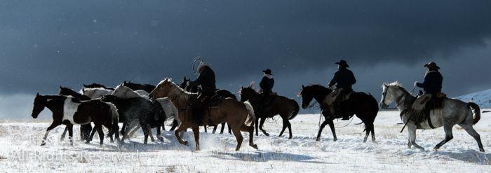 Rafle d'hiver, des cow-boys dans la neige avant la neige de l'hiver._JLP5916 #neiged#39;hiver