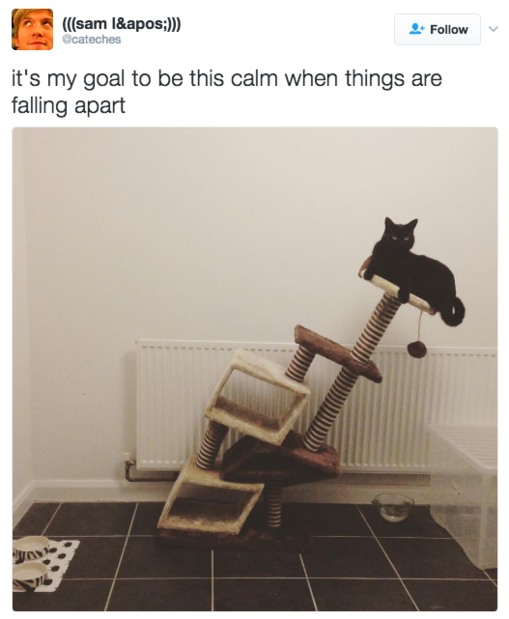 17 Memes That Will Make You Love Cats Even More | Blaze Press
