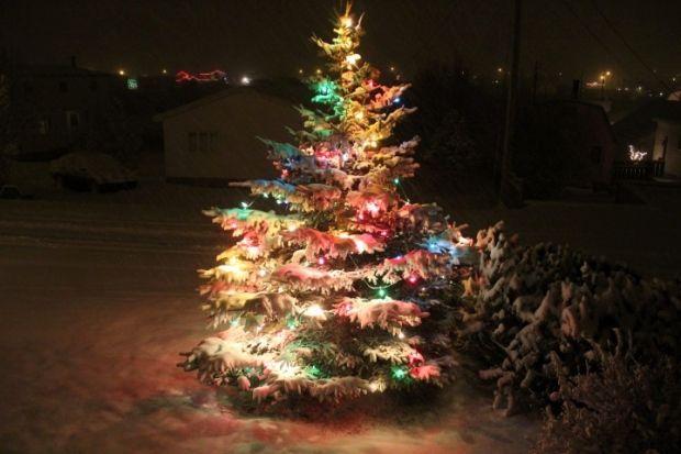 Christmas Tree. ( Sharon White)