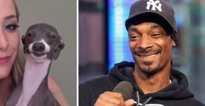 503143a7e61c7006befe7c1406d216aa this dog looks like snoop dogg snoop dogg, funny memes and hilarious