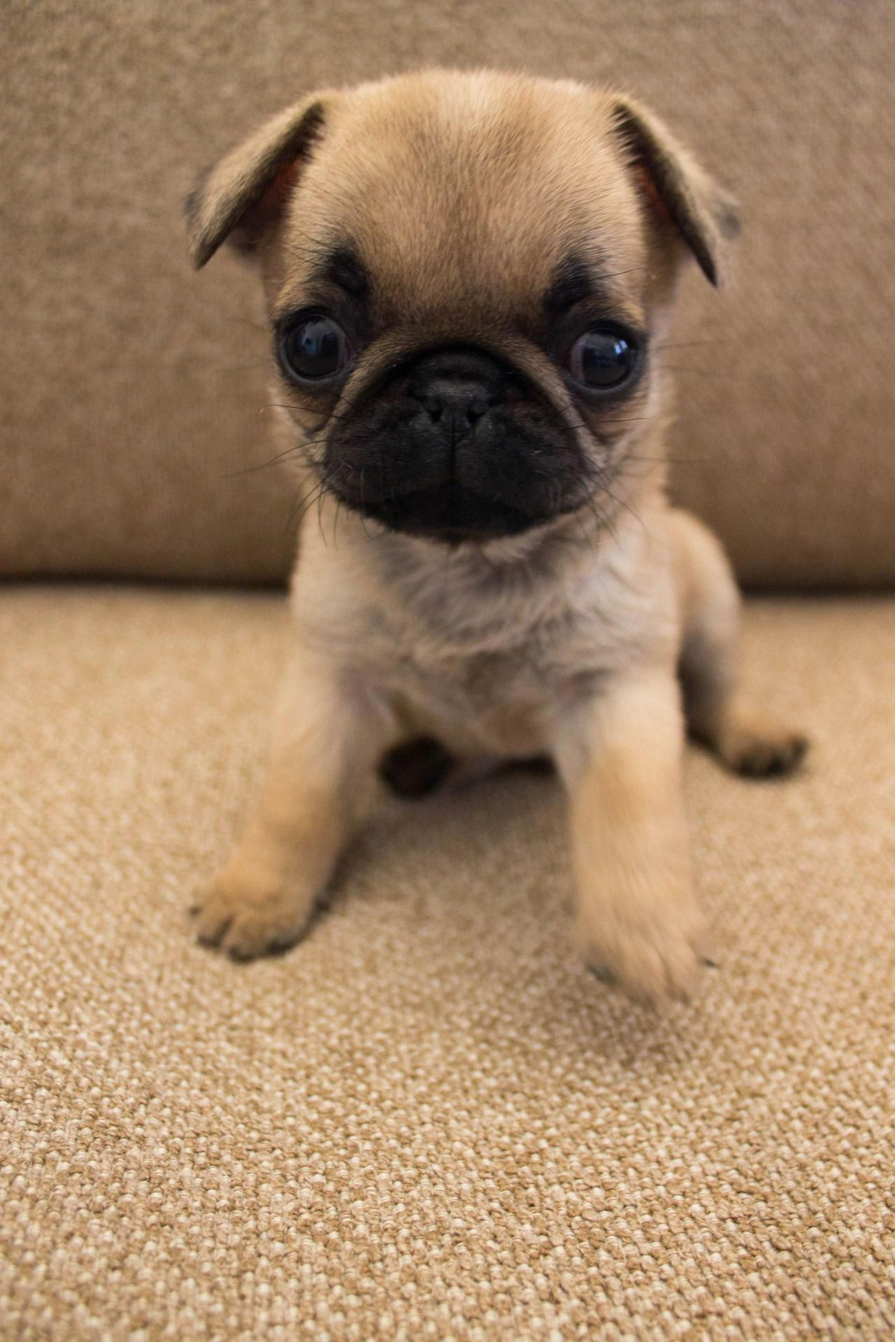 Learn Even More Details On Pug Dogs Take A Look At Our Site