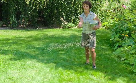 richtig d ngen so wird der rasen sattgr n garten garden green lawn und lawn. Black Bedroom Furniture Sets. Home Design Ideas