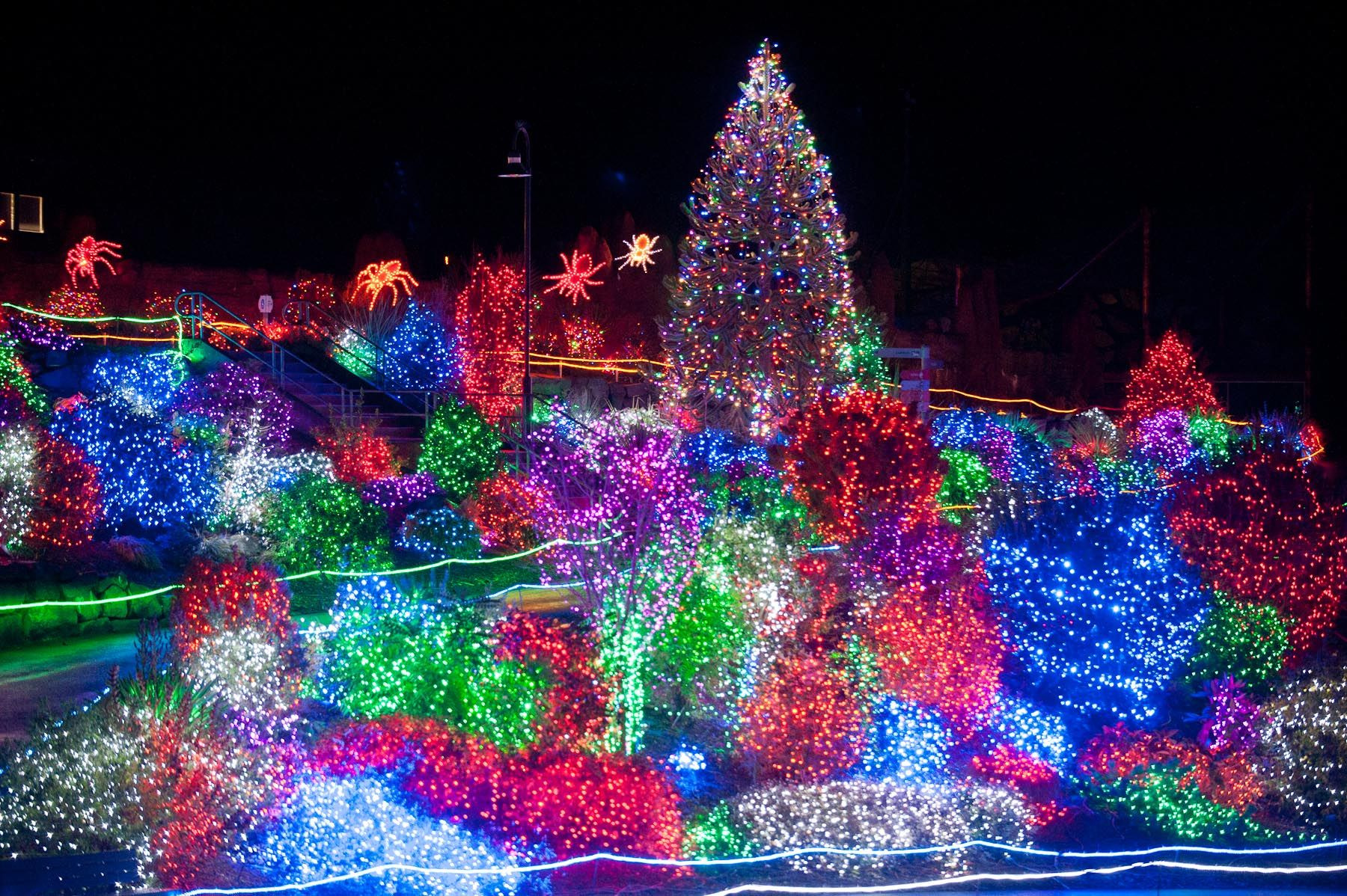 Home Point Defiance Zoo Aquarium Point Defiance Zoo Zoo Lights Things To Do Seattle
