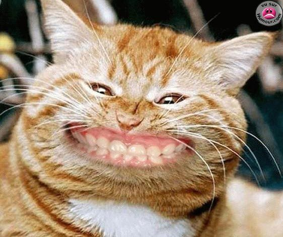 Souvent Épinglé par Claude sur EXCELLENT | Pinterest | Image drole animaux  JY36