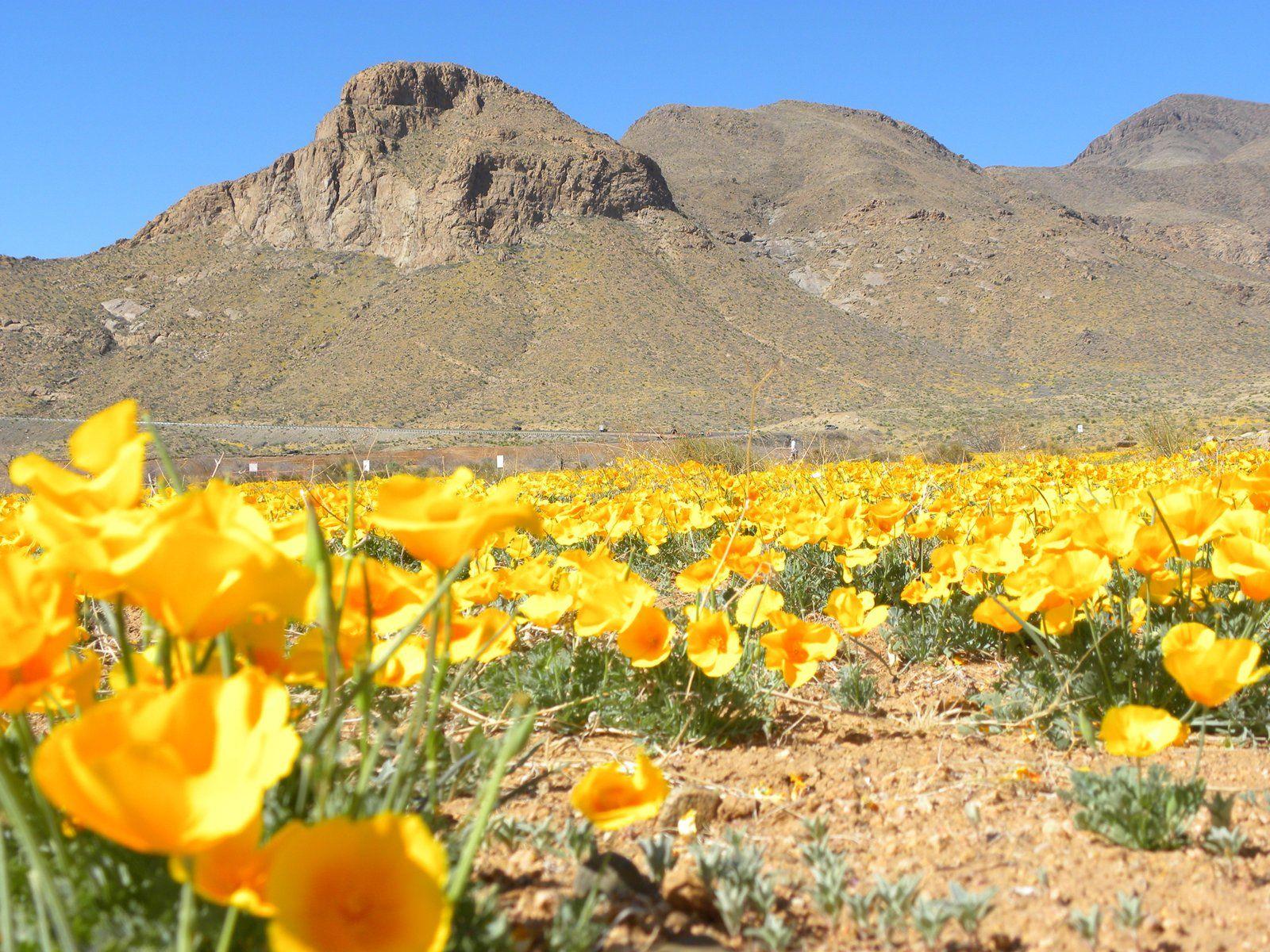 Springtime In El Paso Texas Southwest Travel El Paso Texas
