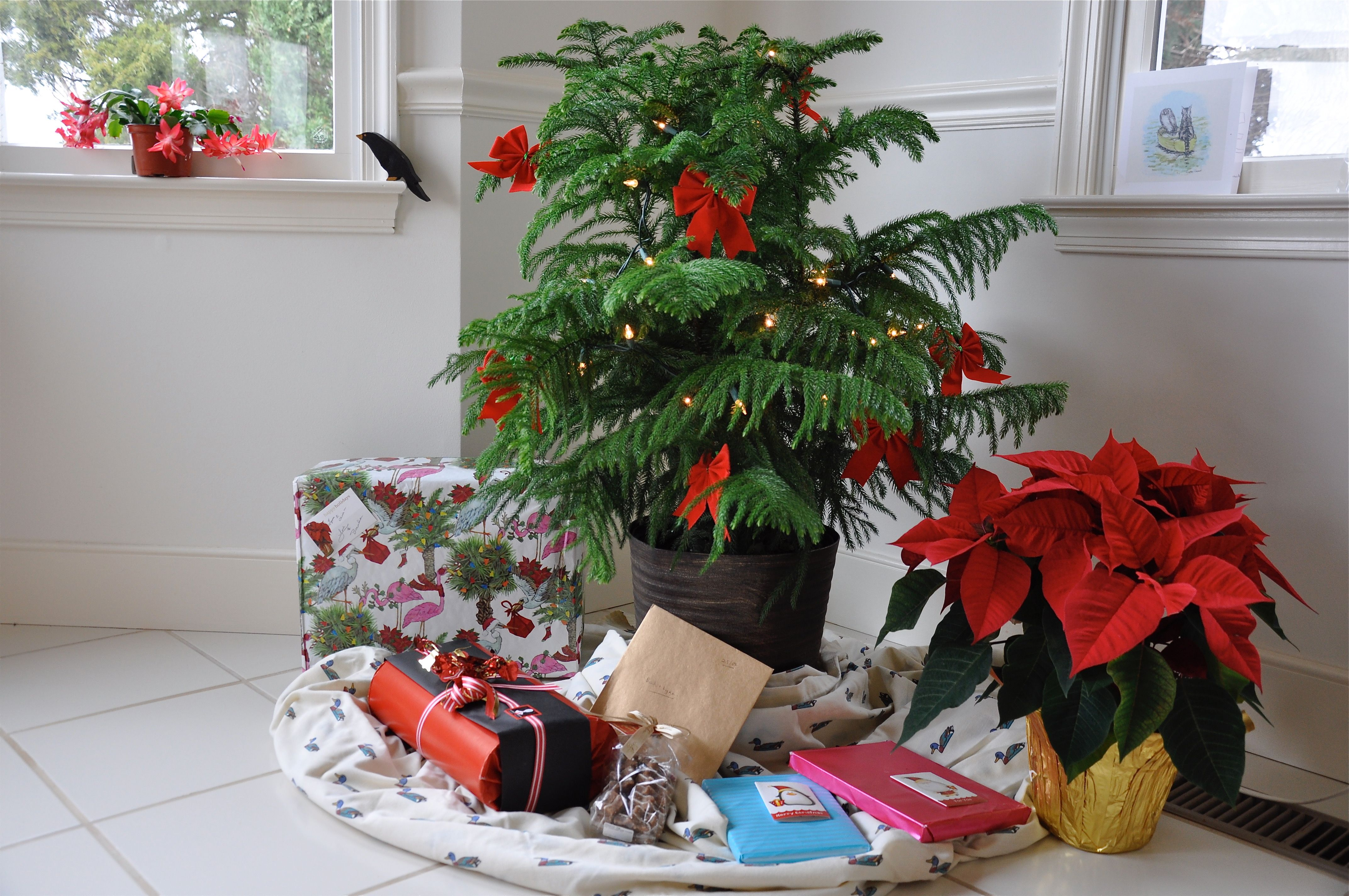 No room for a traditional tree? Here's how a Norfolk ...
