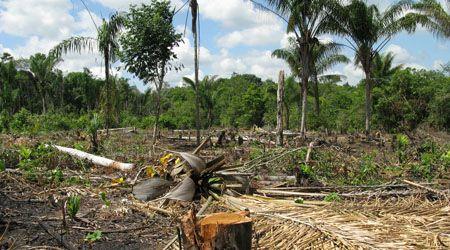 Rainforests Deforestation Amazon Rainforest Deforestation