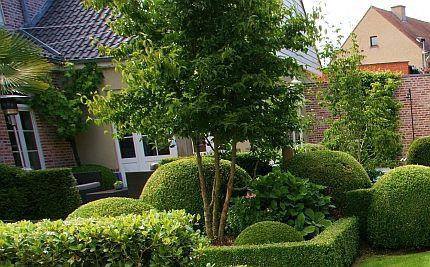 Boom Kleine Tuin : Mooie bomen voor de kleine tuin huis en tuin tuin