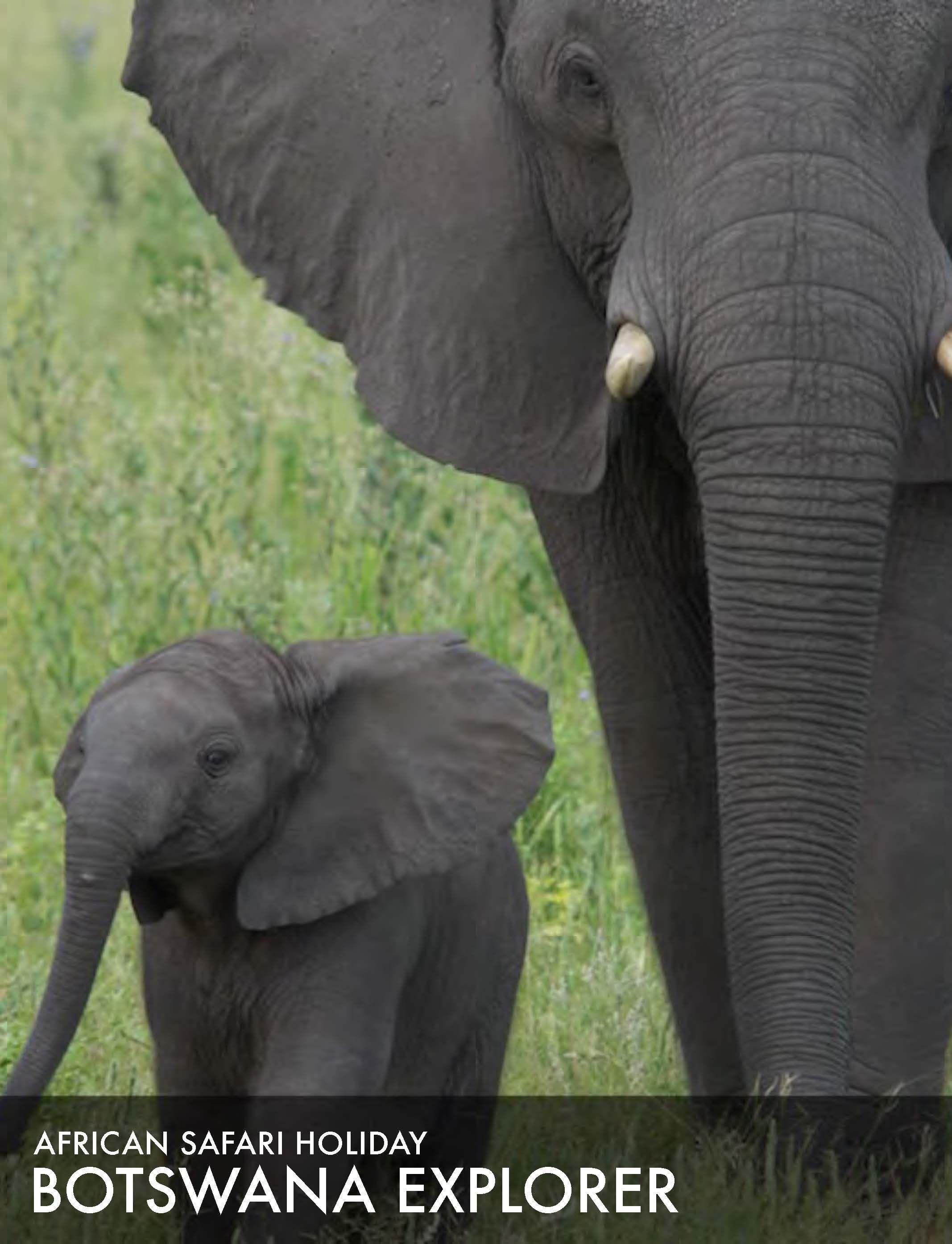 African safari tour 2015: Botswana Explorer