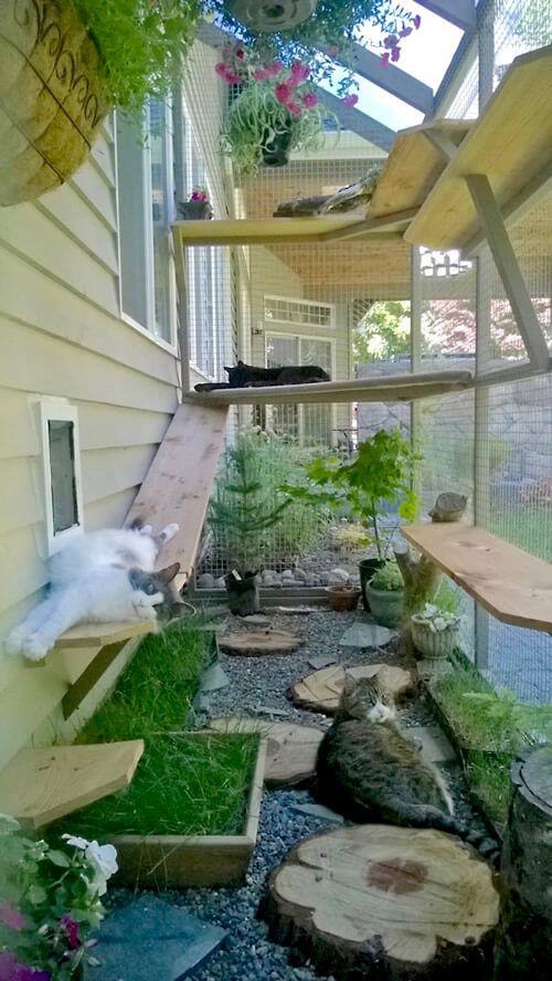 Catio Cat Enclosure Cats Lounging Interior Haven Catiospaces Pet Friendly Backyard Cat Patio Outdoor Cat Enclosure