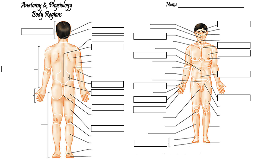 Body Regions Labeling Front Nursing Surgical And Medical
