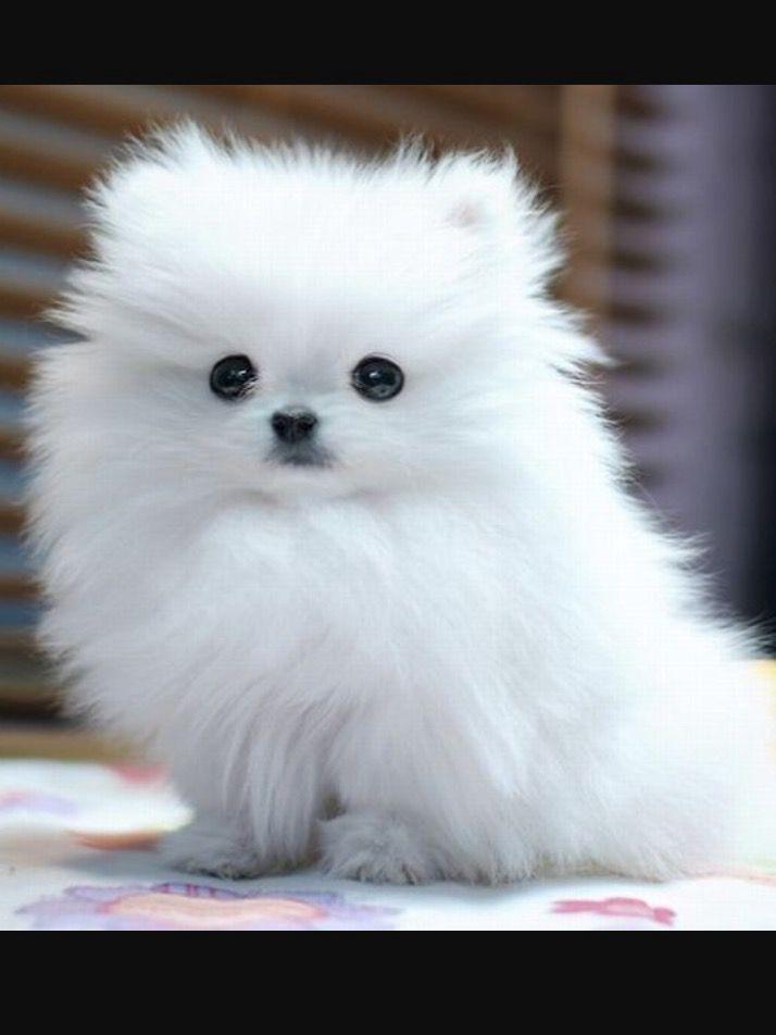 Love Jungkook X Reader 06 Cute Dog Photos Fluffy Dog
