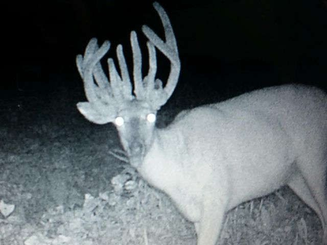 A doe with antlers? Hunter thought he scored his biggest buck yet