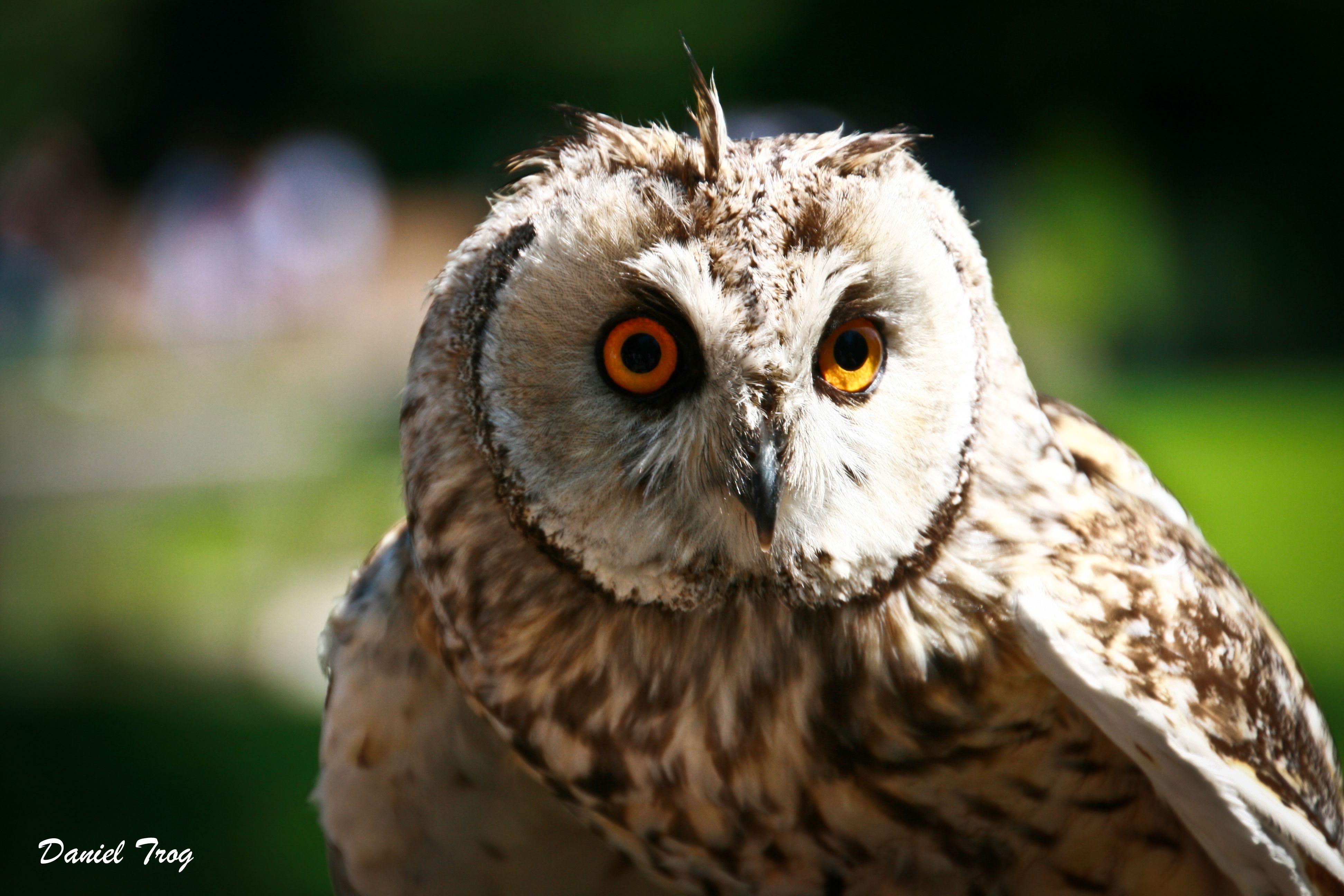 owl zoo munich