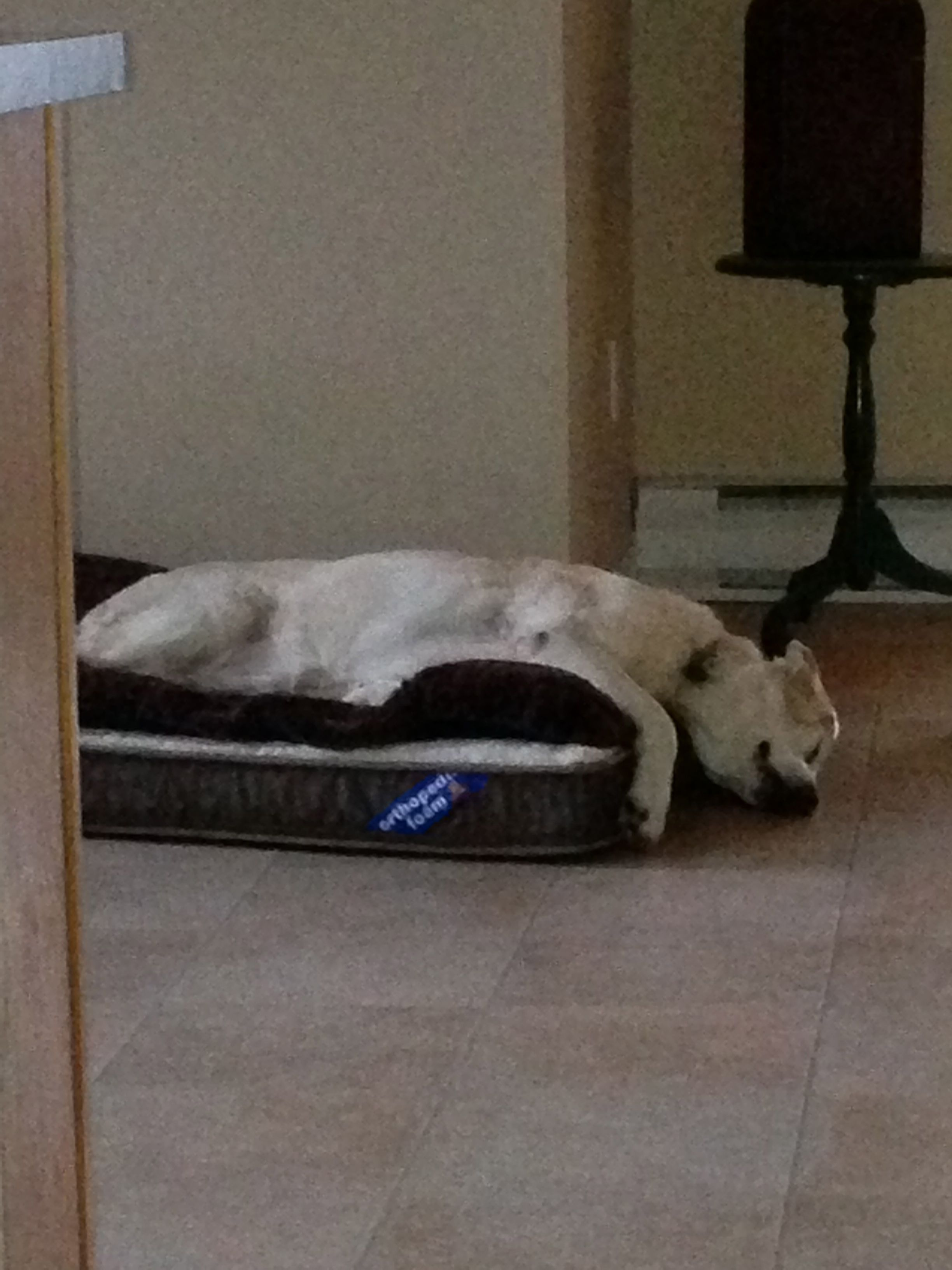 Hanna loves her bed and is pooped after a walk. Doesn't take much these days.