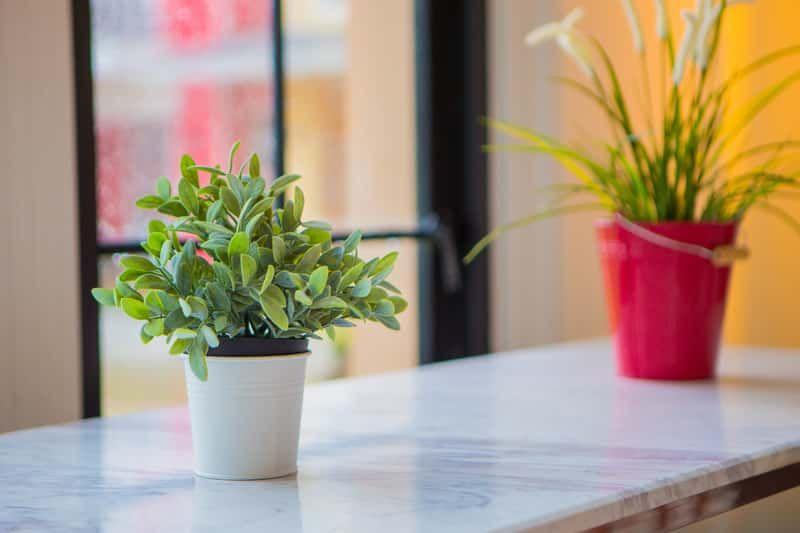Domowe Kwiaty Doniczkowe Przeglad Plants