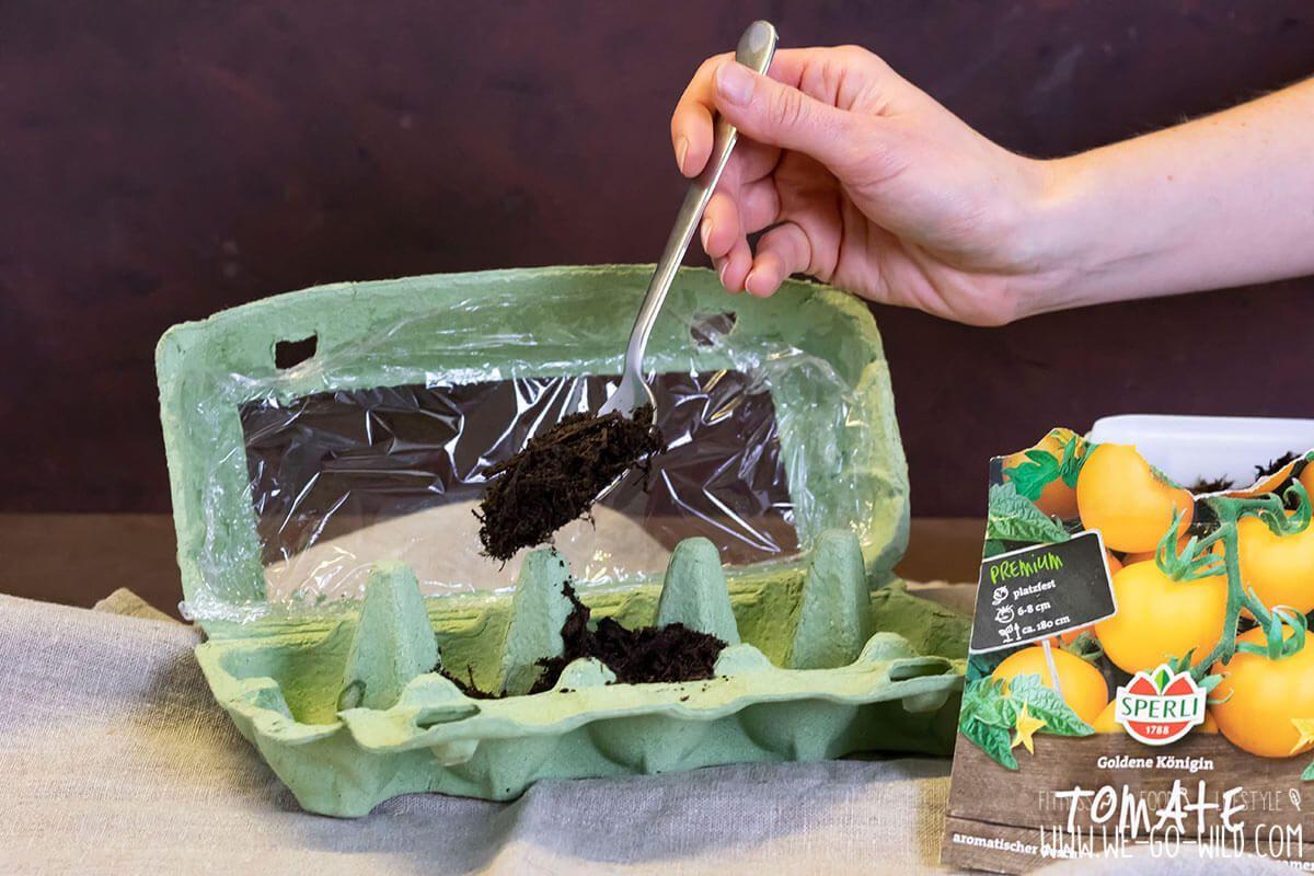 Tomaten selber ziehen im Eierkarton Gewächshaus