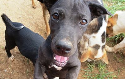 I am hoping you will read my story and open your home to me. I will never let you down if you do. If you can find it in your heart to adopt me, PLEASE EMAIL cristy@soidog.org http://www.soidog.org/en/adoptions/adoption-costs/