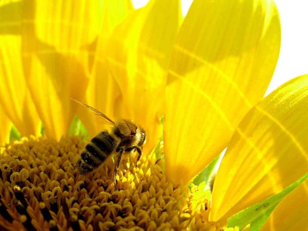 Honey has been valued as a natural sweetener long before sugar became widely…