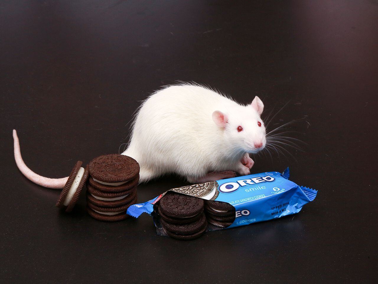 Addicted to Oreos? You truly might be
