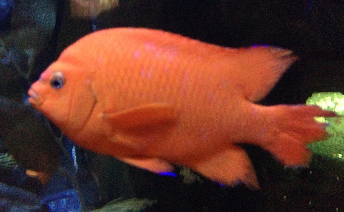 Dallas aquarium during the state fair | Pets | Pinterest | Dallas ...