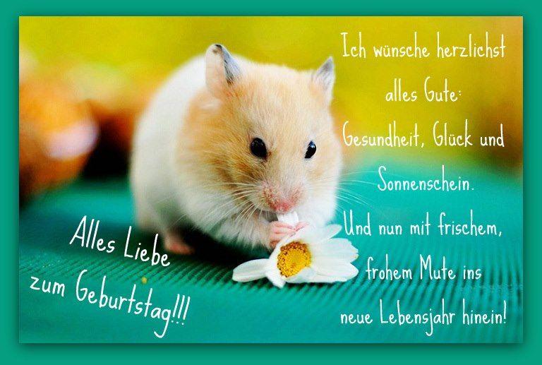 Geburtstagswunsche Fur Ein Sonntagskind Nooriyya Chandio