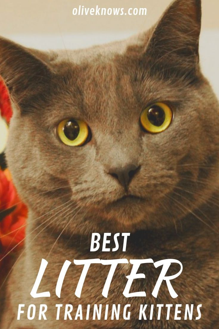Best Litter for Training Kittens (You'll Be Happy Too