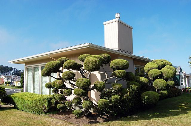 Seuss Ranch With Images Mid Century Landscaping Daly City
