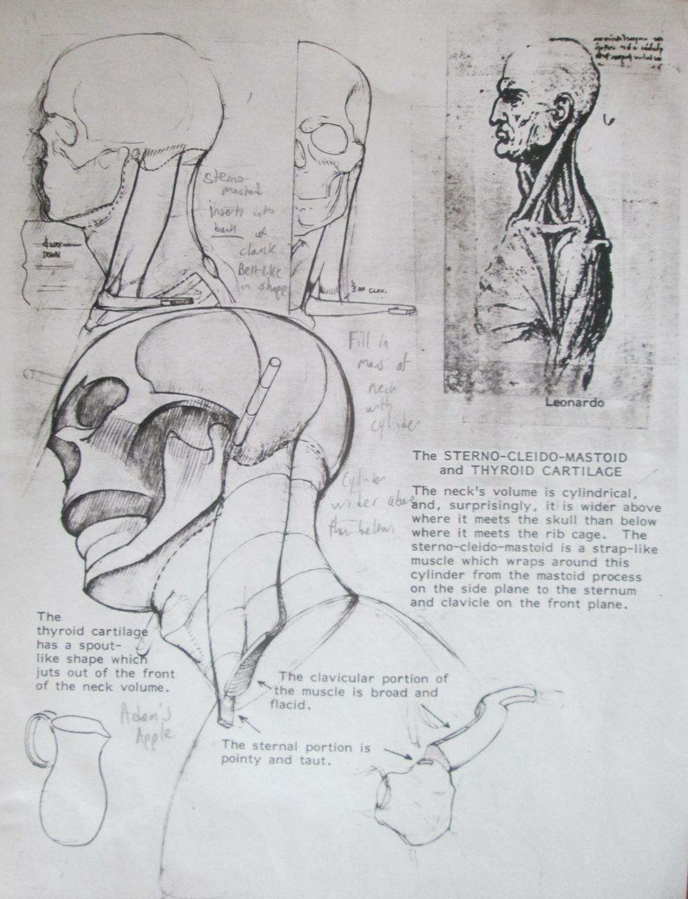 Ecorche notes from R. Melick. | anatomy | Pinterest | Note, Anatomy ...