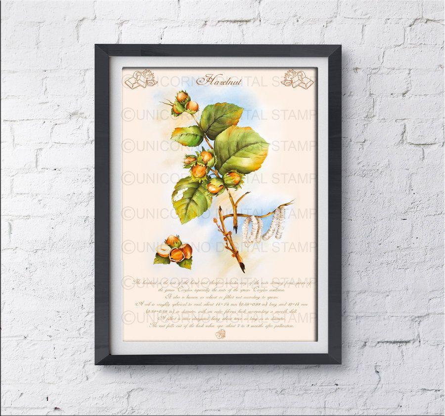 Hazelnut plant stamp, fruit wall art, Kitchen wall Art, artwork ...