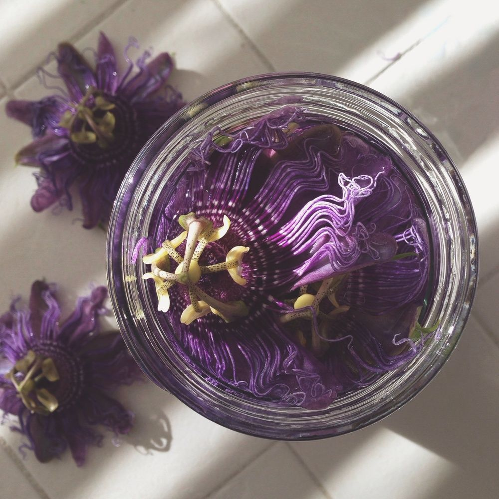 Passion Flower Tincture Used As A Nerve Tonic Herbal Healing Natural Herbal Remedies Herbal Tinctures