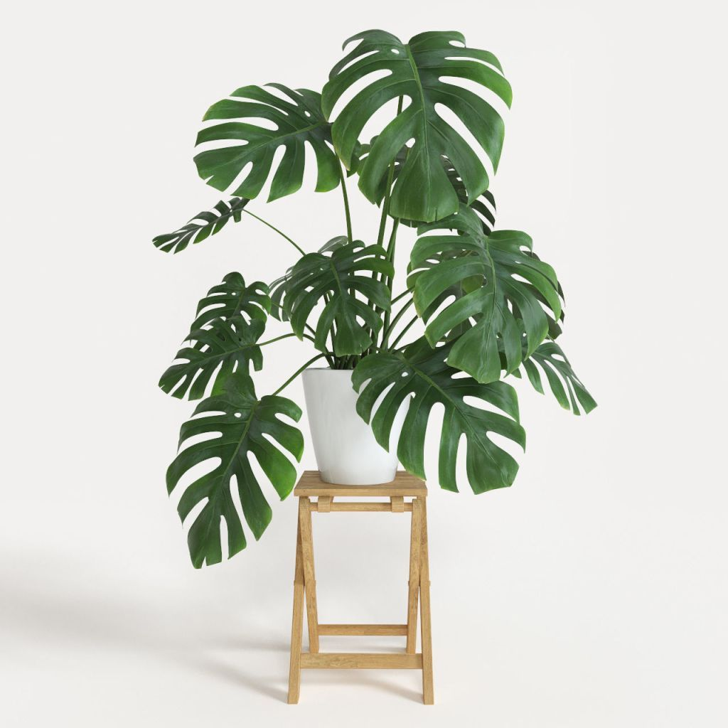 15 plants Balcony house ideas