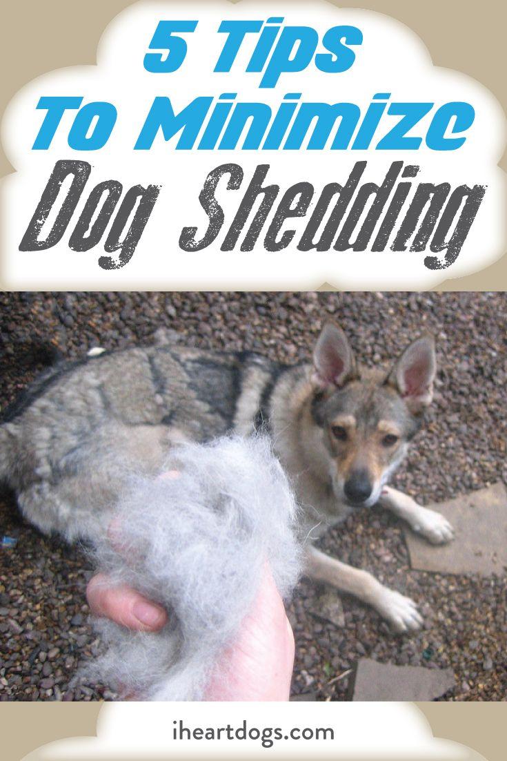 5 Tips To Minimize Dog Shedding Dog Shedding Deshedding Dog Pet Shed