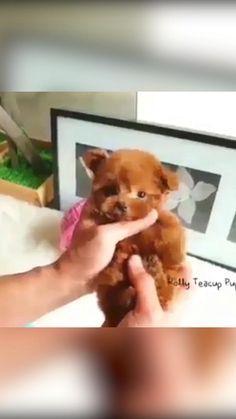 Realistic Teddy Dog