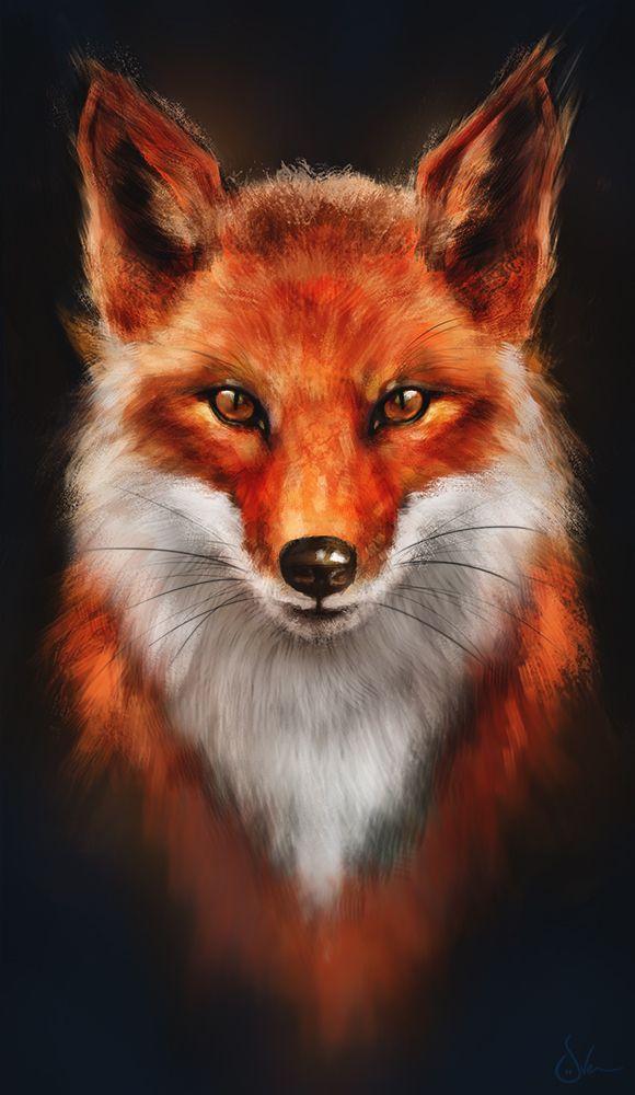 Beautiful Fox Drawing Animals Pinterest Volpe Rossa Disegno