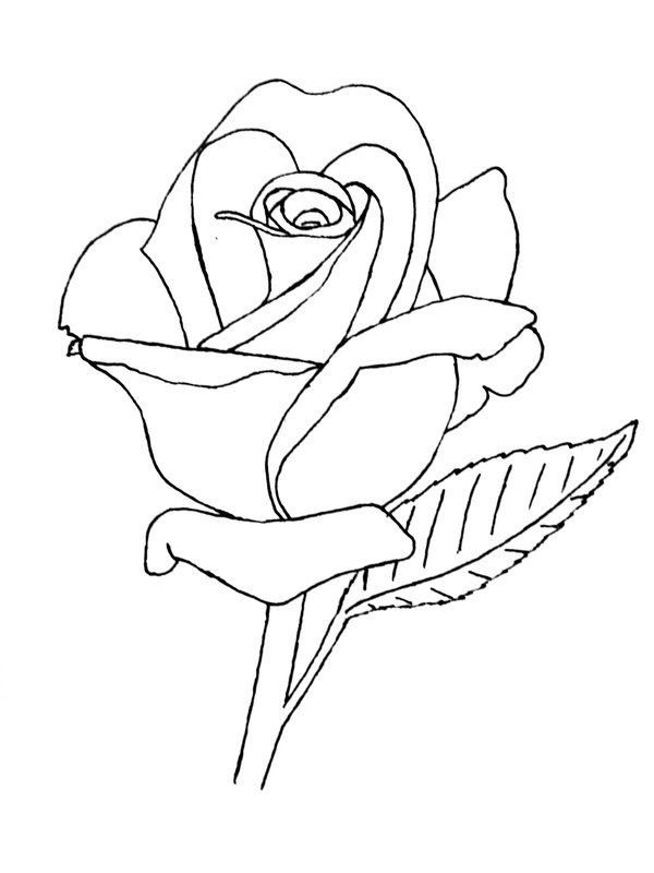 Line Drawing Of A Rose : Line drawings of animals rose drawing