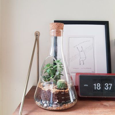 suck UK Chemistry Glass Terrarium -   13 planting House glass ideas