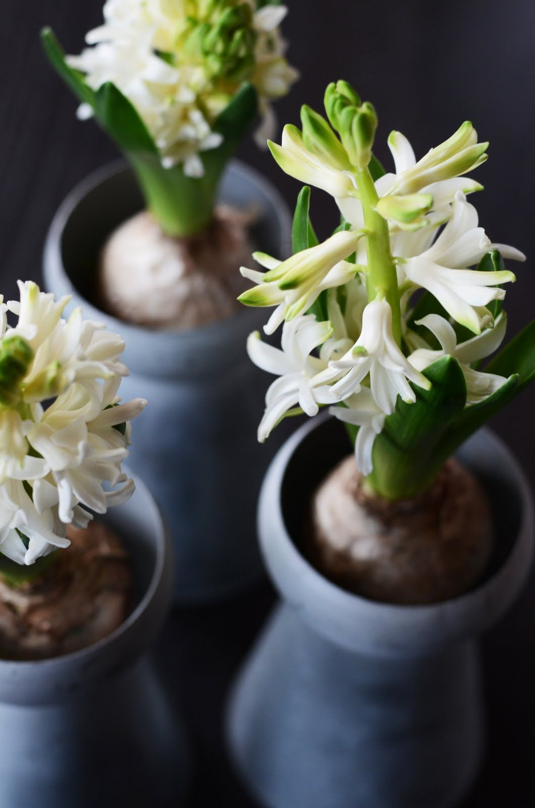 Imagine the sweet scent from those lovely hyacinths.
